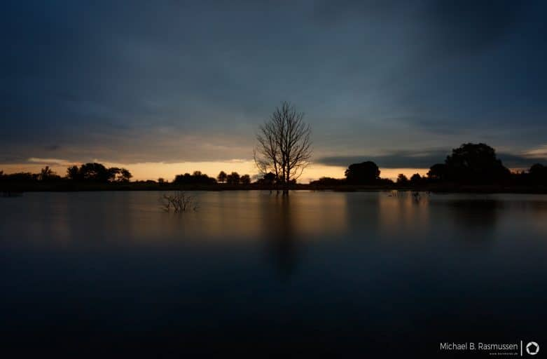 The dead tree in the lake