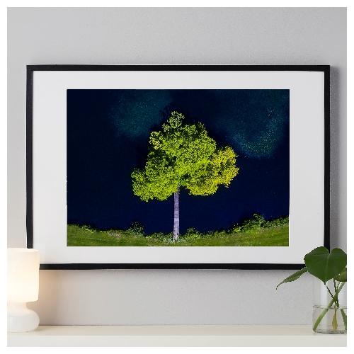 Træet i søen
